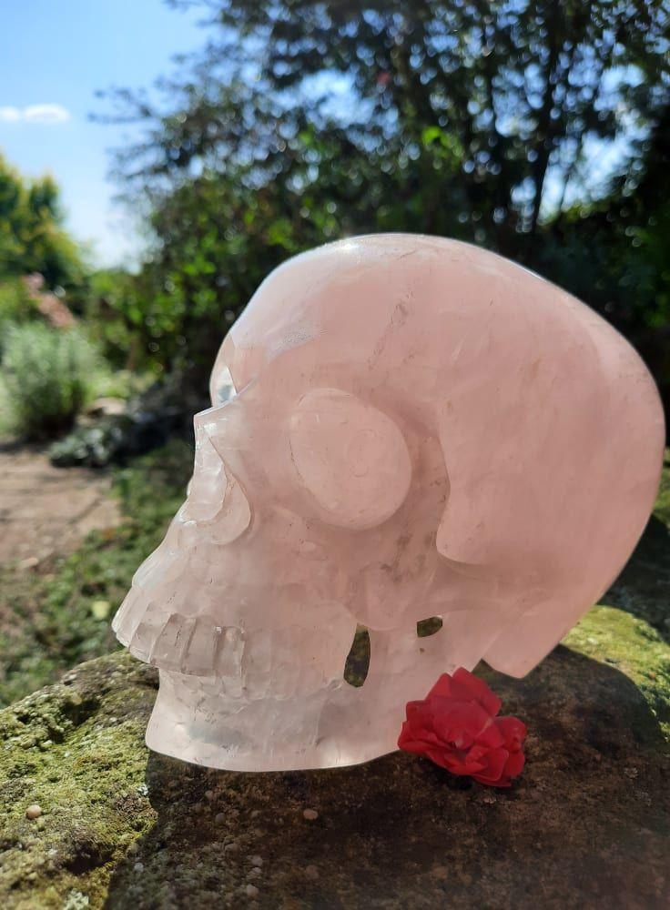 Lebka/Skull/Schädel Růženínu/Rosequartz/Rosenquartz 15cm